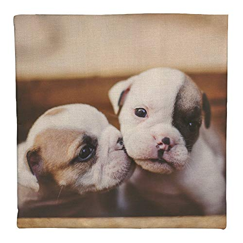 UCLIPERS Cotton Decorative Throw Pillow Cover Cushion Cover for Couch Sofa Bedroom Selective Focus Photography of Two White and Brown Puppies Pillowcase 18 x 18 Inches]()