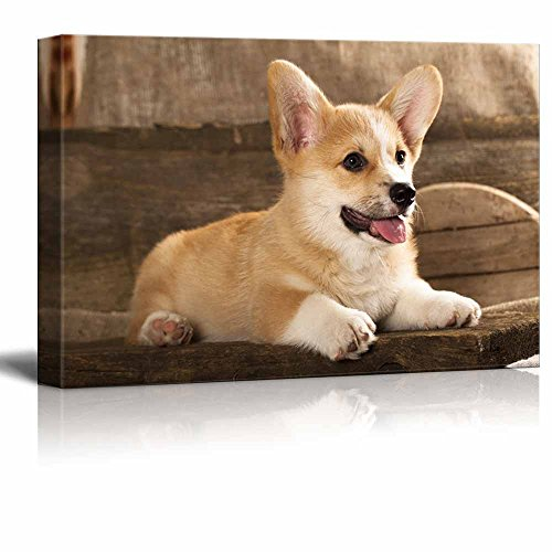 Canvas Prints Wall Art - Cardigan Welsh Corgi Puppy - 12