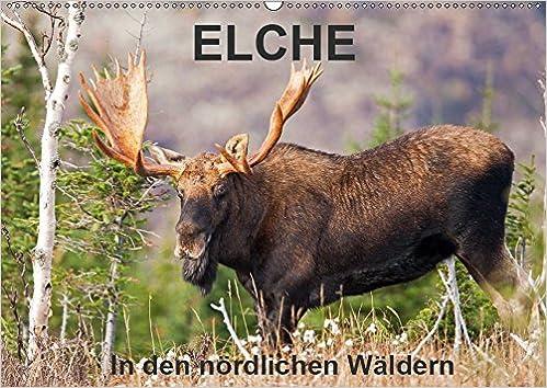 Amazon.com: ELCHE In den nördlichen Wäldern (Wandkalender ...