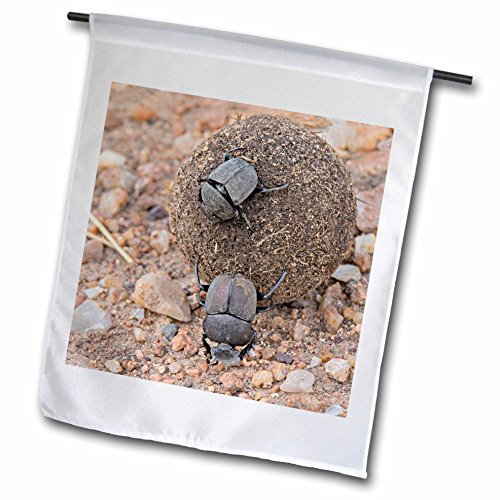 3dRose Danita Delimont - Insects - Africa, Tanzania, Serengeti. Pair of dung beetles rolling a dung ball. - 12 x 18 inch Garden Flag (fl_256961_1) Dung Ball