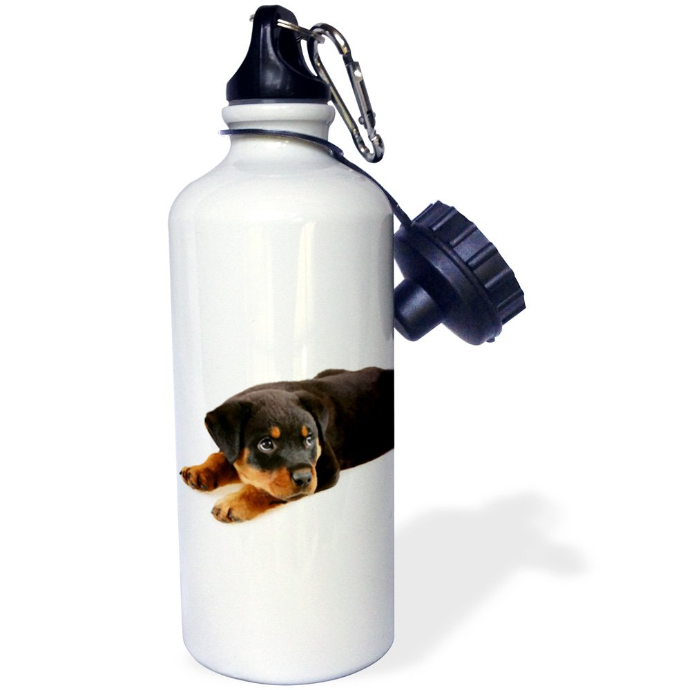 3dRose wb/_4185/_1Rottweiler puppy Sports Water Bottle White 21 oz