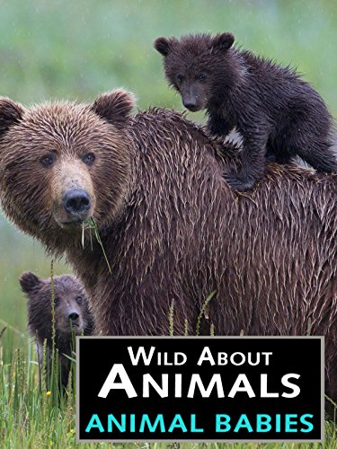 (Wild About Animals: Animal Babies)