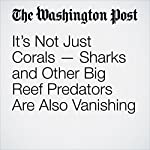 It's Not Just Corals — Sharks and Other Big Reef Predators Are Also Vanishing | Darryl Fears