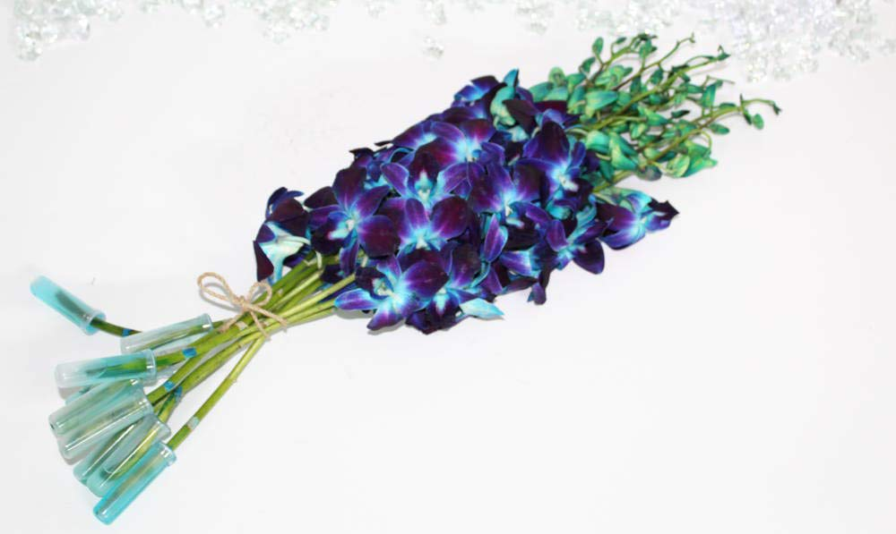 Athena's Garden Fresh Dyed Blue Cut Orchids Bunch with Vase with Glass by Athena's Garden