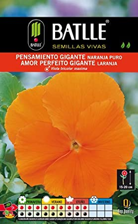 Graines Fleur Pensee Orange Sur Amazon Fr Jardin