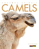 Amazing Animals: Camels, Kate Riggs, 0898129257