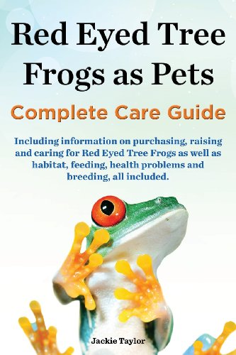 Red Eyed Tree Frog Care - 1
