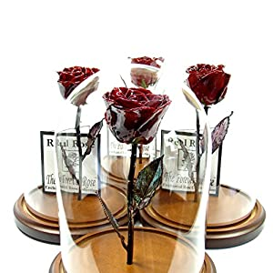 Forever Rose USA Brand - The Beauty and The Beast Rose - Enchanted Rose - This is a Real Rose! ... 58
