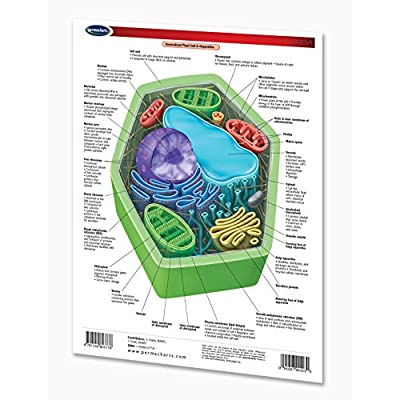 Cellular Plant and Animal Anatomy Notebook Chart: Industrial & Scientific