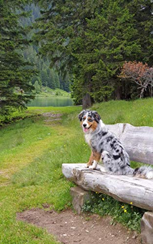 Notebook: Tricolor Border Collie On A Seat In The