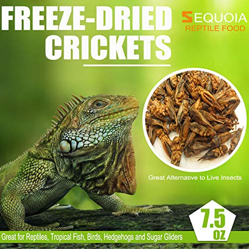 SEQUOIA Freeze Dried Crickets Pet Food for Chickens, Ducks, Wild Birds, Lizard,Turtles, Hamsters, Fish, Chameleon and Hedgehogs (7.5 OZ) (Best Large Pet Lizards)