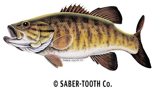 Why Choose Smallmouth Bass Fish Decal Sticker ~ Fishing & Wildlife Series
