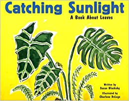 Catching Sunlight: A Book About Leaves Descargar ebooks Epub