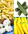 Squash Summer Medley 25 Gold Zucchini / 25 Gray Zucchini / 25 Black Beauty Zucchini / 25 White Scallop Squash Seeds
