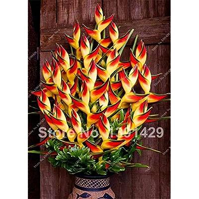 """Konato - 100pcs Aloe Vera Flores, Rare Herb Bonsai Plantas Tree Plante for Home Garden DIY, Edible Beauty Cosmetic Use Fruit Vegetable Pots - (Color: Mix)"""" : Garden & Outdoor"""