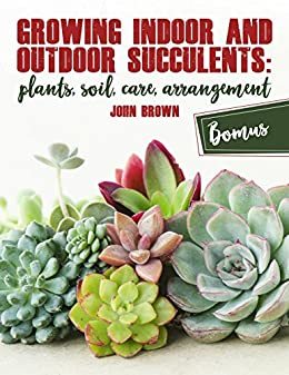 Growing Indoor And Outdoor Succulents Plants Soil Care