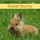 Sweet Bunny 2020: Rabbits and Pets (Calvendo Animals)