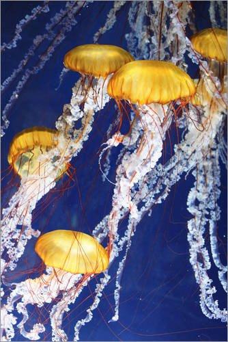 Poster 40 x 60 cm: Jellyfish Parade di Editors Choice - Stampa Artistica Professionale, Nuovo Poster Artistico