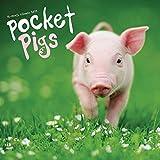 2019 Pocket Pigs 2019 Wall Calendar, Pigs by Vista Stationery & Print Ltd