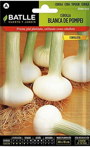 Semillas Hortícolas - Cebolla blanca de Pompei - Batlle: Amazon.es ...