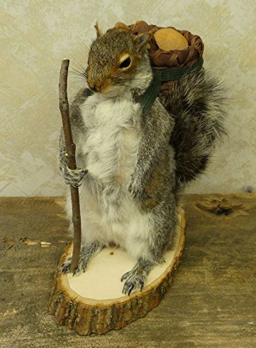 Miraculous Amazon Com Hiking Squirrel Professional Taxidermy Mounted Download Free Architecture Designs Photstoregrimeyleaguecom