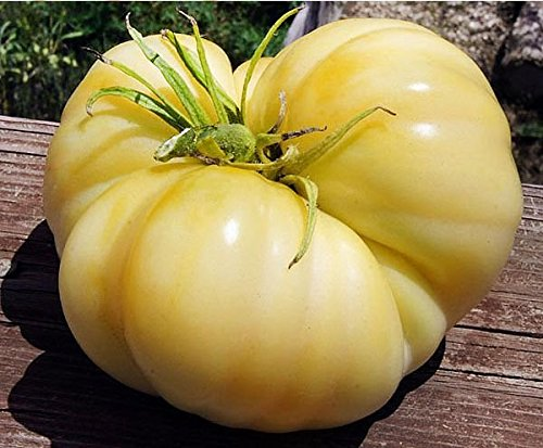 50+ ORGANICALLY GROWN GIANT White Wonder Beefsteak 1-2 LB Tomato Seeds, Heirloom NON-GMO, Determinate, Open-Pollinated, Productive, Meaty, Super-sweet Flavor and Low Acid, Slicer, From USA