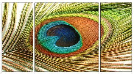 Peacock Feather Eye Canvas Wall Art prints high quality