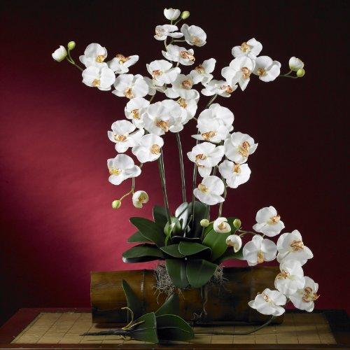New Phalaenopsis Silk Orchid Flower w/Leaves(6 Stems)(Cream)