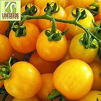 Liveseeds - TOMATO Cherry Yellow Honeybee 20 Finest UK Crop Seeds