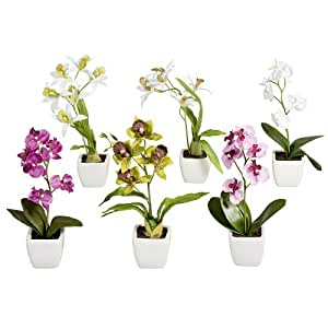 Plantas de 6 Mini orquídea de una mano en blanco de cerámica, 18 cm, varios colores flores artificiales