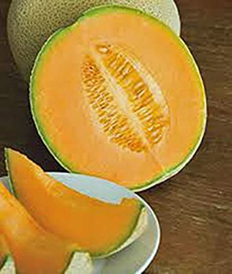 Cantaloupe Seed , Hales Best Jumbo, Heirloom, Organic, Non Gmo, 25+ Seeds, Melon