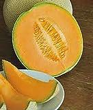 CANTALOUPE SEED, HALES BEST JUMBO, HEIRLOOM, ORGANIC, NON GMO, 25+ SEEDS, MELON