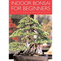 Indoor Bonsai for Beginners: selection, care, training