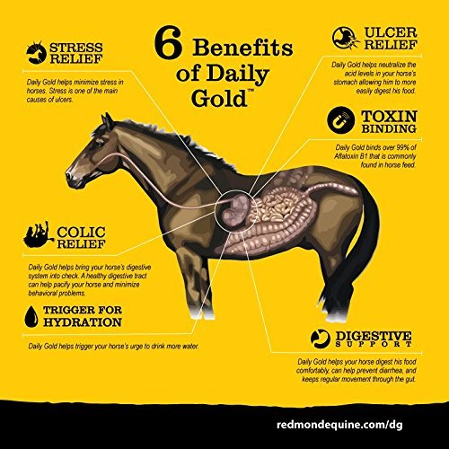 REDMOND Daily Gold Natural Healing Clay for Gastric Ulcers in Horses (Stress Relief Pre-Race Paste)-3 Pack by REDMOND (Image #4)