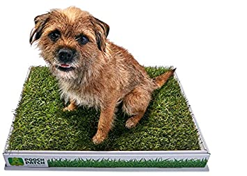 real grass patch for dogs canada