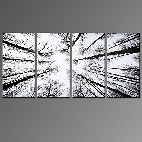 Live Art Decor - Black and White Forest Canvas Wall Art Low Angle View Aspen Trees Picture Print on Canvas,San Juan National Forest,4 Panels Framed Artwork for Modern Home Wall Decoration,Large Size by Live Art Decor