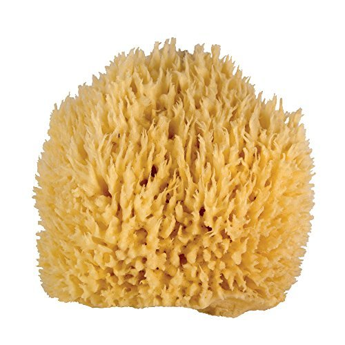 WHOA DADDY! Ultra Soft & Manly Large Sea Wool Bath Sponge by Jade & - Manly Mall