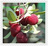 10 pcs / Pack,arbutus seeds myrica rubra seeds red bayberry seeds perennial arbutus taste sweet fruit tree