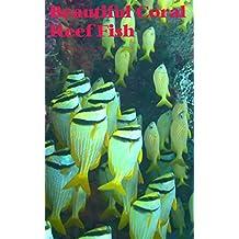 Beautiful Coral Reef Fish (Vol 1) (German Edition)