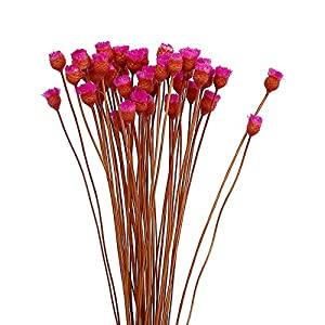 AESTHING Natural Dry Flowers Happy Flower Bundles-Flowers Bouquet for Wedding DIY Home Party 1 Bundle 50pcs Pack 116