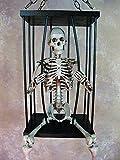 "Skeleton Cage with 33"" Skeleton"