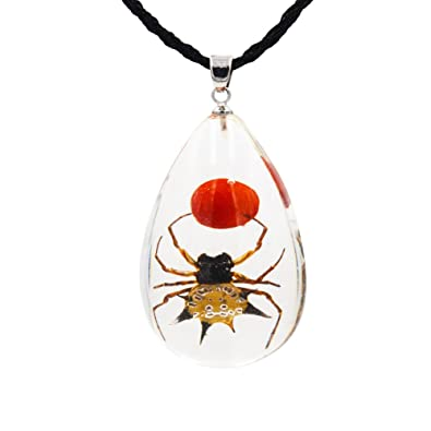Amazon fottcz real spider necklace real spider pendant real fottcz real spider necklace real spider pendant real spider pendant necklace spider aloadofball Image collections