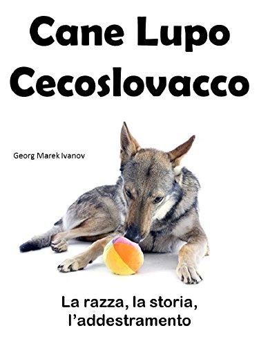 Il Cane Lupo Cecoslovacco La Razza Il Carattere Laddestramento