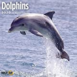 Dolphins Wall Calendar 2020 by