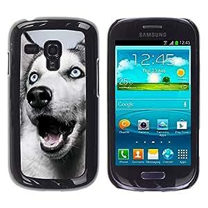 YiPhone /// Prima de resorte delgada de la cubierta del caso de Shell Armor - Siberian Husky Blue Eyes Dog White - Samsung Galaxy S3 MINI NOT REGULAR! I8190 I8190N