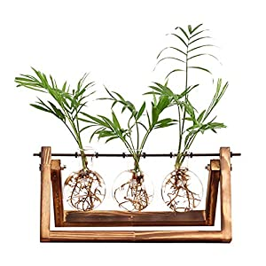 Ivolador Desktop Glass Plants Bulb Terrarium with Retro Solid Wooden Stand and Metal Swivel Holder for Hydroponics…