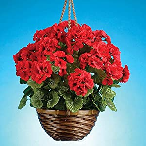 18 Inches High Hanging Red Geranium Flowering Plant in Wicker Basket, Artificial Floral 75