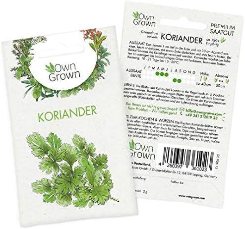 OwnGrown Premium Koriander Samen (Coriandrum sativum), Koriandersamen einjährig zum Pflanzen, Saatgut für rund 120 Koriander Pflanzen
