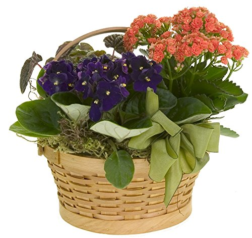 Kalanchoe & Violet Basket Standard by Plaza Florist - Fresh Flowers Hand Delivered in Philadelphia Area
