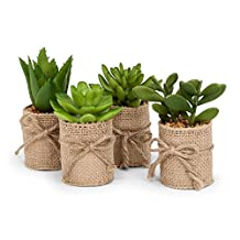 Abbott Collection Home 27-MOJAVE/01 Set of 4 Green Artificial Succulents in Burlap Wrap